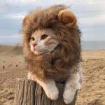 Lion Mane Wig Cat Pet Costume